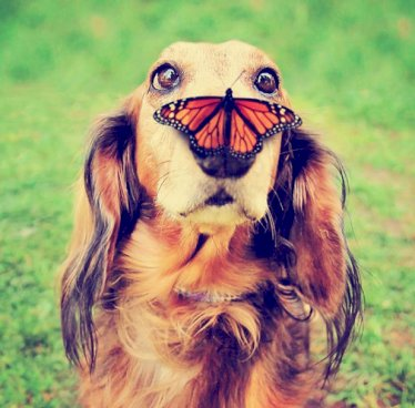 dog-butterfly